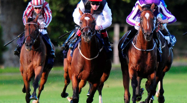 Connections of Free Eagle (centre) are keen to let the dust settle on his controversial defeat in Saturday's Irish Champion Stakes before committing to future targets.
