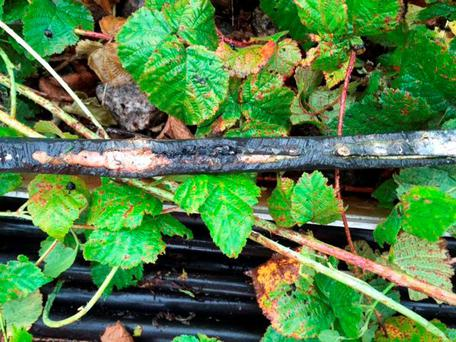 Cable damaged by a rodent which shut down signals between Wigston and Market Harborough, Leicestershire yesterday causing trains travelling between the East Midlands and the capital to be severely delayed Credit: Network Rail/PA Wire