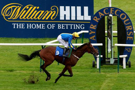 Robert Winston on Evanescent wins the 2013 Irish Yearling Sales Handicap Stakes at the William Hill Ayr Gold Cup Festival at Ayr racecourse in Scotland.