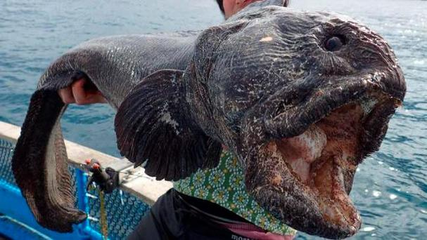The giant fish was more than 2 metres in length Credit: Hiroshi Hirasaka