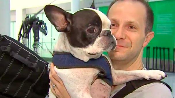 Seven-year-old French bulldog Simba and owner German Kontorovich Credit: City News