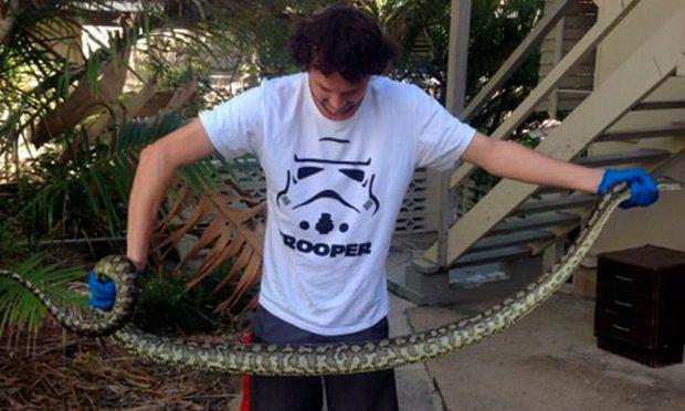 The 2.6 metre snake was the second python Mr Budd had taken from a toilet that week Credit: Elliot Budd