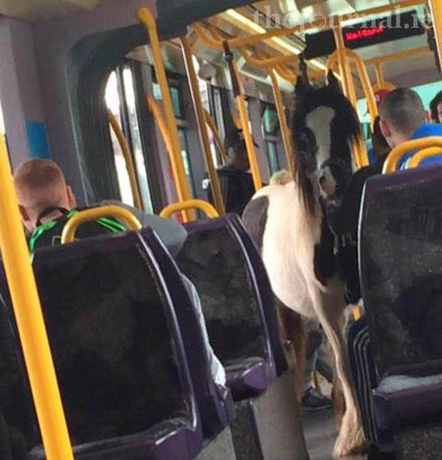 The horse appeared to be quite happy riding the rails Credit: Una McCrystal