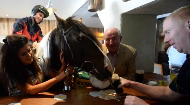 The horse got up, close and personal with a pint of plain