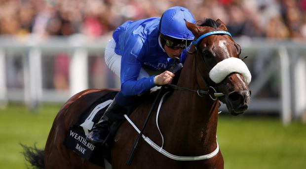 Portage has been heavily backed to foil Bronze Angel's bid for an unprecedented third victory in Saturday's Cambridgeshire