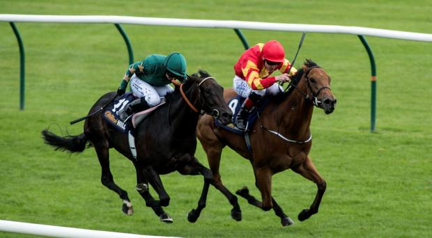 When Murphy's Only Mine (right) was edged out in an Ayr Group Three on Saturday, it was the third time in as many days that one of his horses filled the runner-up berth