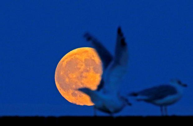 The supermoon raises behind seagulls on the beach in Evanston, Illinois