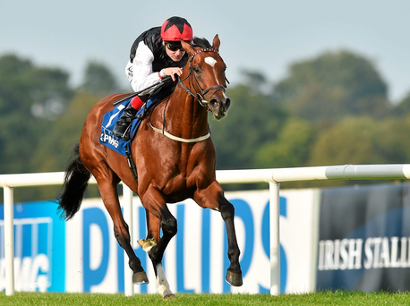 'Free Eagle (pictured) will lead the Irish assault on Longchamp'