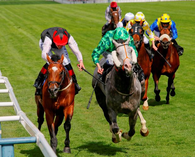 Free Eagle - Pat Smullen wins from The Grey Gatsby - Jamie Spencer The Prince of Wales?s Stakes (British Champions Series) (Group 1) Royal Ascot 17/6/2015 ?cranhamphoto.com