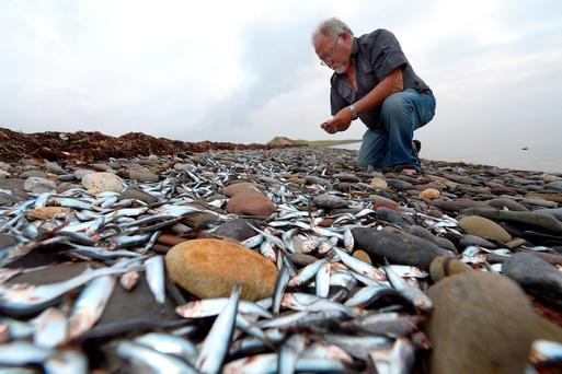 OVERWHELMING: Kevin Flannery examines the dead fish