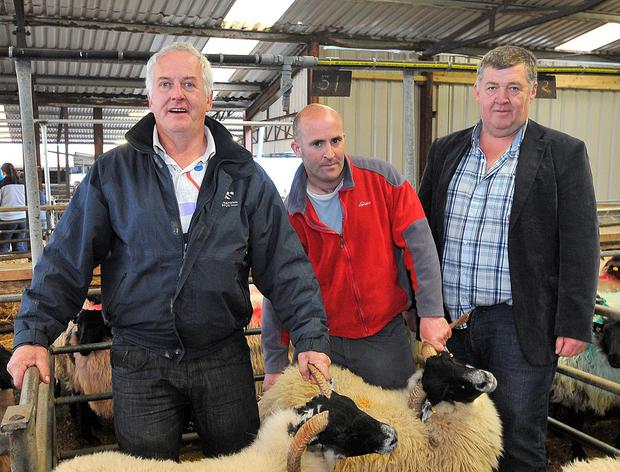 Joe McEvilly from Killawalia (centre) was a winner at Mayo Blackface Sheep breeders show with his hoggetts, with Jimmy O'Dwyer and Pat Deane (Show Judges). Photo: Conor McKeown