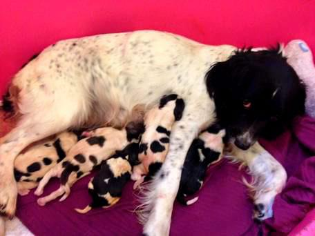 Meg the dog and her puppies