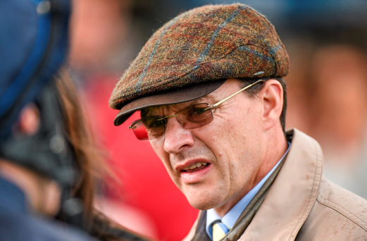 Aidan O'Brien introduces a regally-bred newcomer Giant Redwood