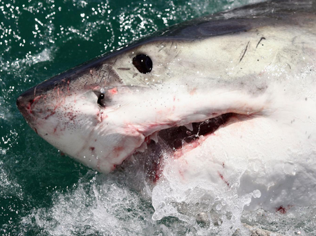 Eugene Finney was slammed in the back by a shark Dan Kitwood/Getty Images