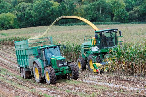 Contractor Lloyd Forbes and Jason O'Leary, Carrigaline pictured harvesting P7905 & P8200 maize for Neil Sisk. Sown under plastic it yielded 28t/ac. Photo: O'Gorman Photography.