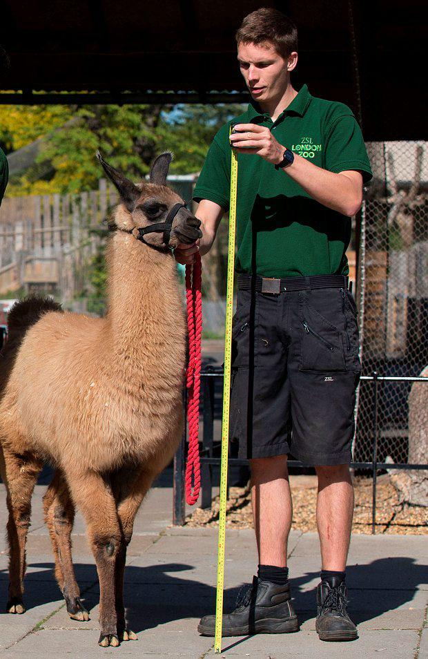 Adam Davies pictured during a stock take at the zoo Photo: Getty Images
