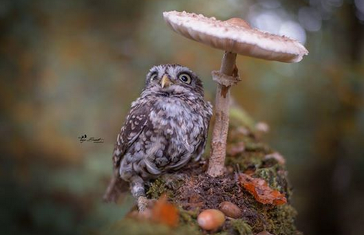 Poldi the adorable baby owl Credit: Facebook/Tanja Brandt