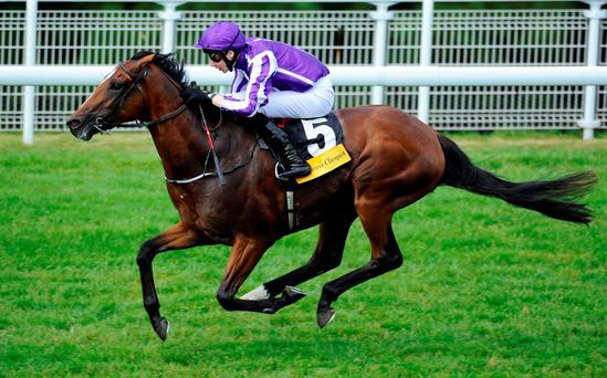Highland Reel is now a 7/2 shot for Australian glory