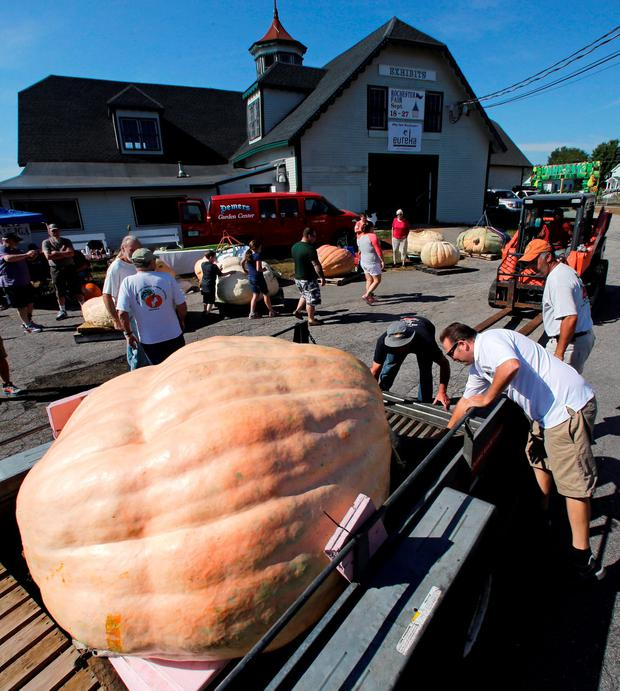 Ron Wallace, right, drops the rear gate of a trailer holding one of the giant pumpkins he grew this season prior to the weigh-off