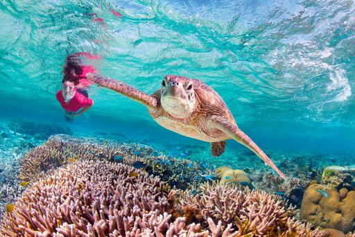 The Great Barrier Reef is the world's biggest single structure from living organisms, and when you're snorkelling, time stands still.
