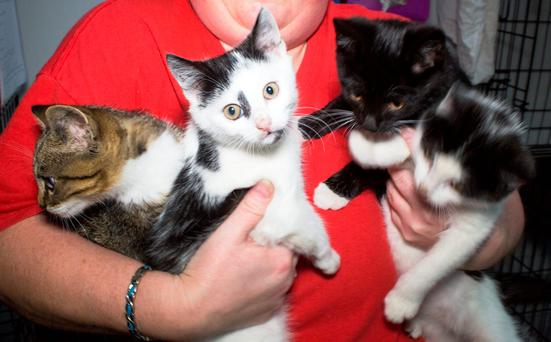 Rescues Kittens at Dogs Aid Animal Sanctuary, Meakstown pictured this morning.