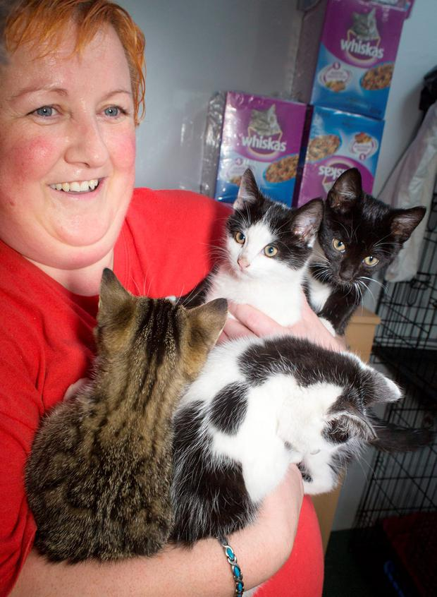 Sharon Walsh of Dogs Aid Animal Sanctuary, Meakstown pictured with the rescued kittens this morning. PIC COLIN O'RIORDAN