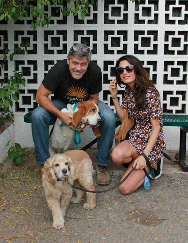 George and Amal Clooney adopted a bassett hound Millie