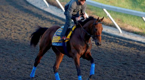 Georgie Alvarez takes American Pharoah for a morning gallop in Keeneland