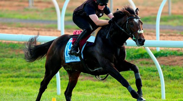The Aidan O'Brien trained Kingfisher works during trackwork ahead off the 2015 Melbourne Cup, at Werribee Racecourse