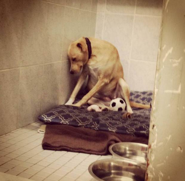 The photo of Lana captioned 'the saddest dog in the world' that went viral last week. Credit:Facebook/Mighty Mutts