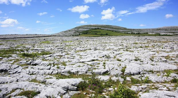 The unique flora of the Burren.