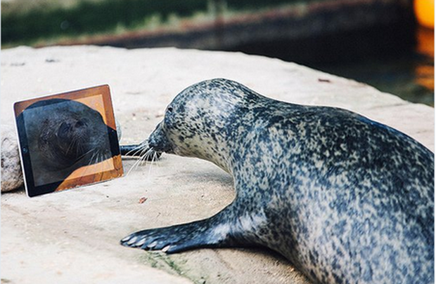 The loved-up pair put their noses close to the screen when they see each other Credit: You/Tube/SeaLife Weymouth
