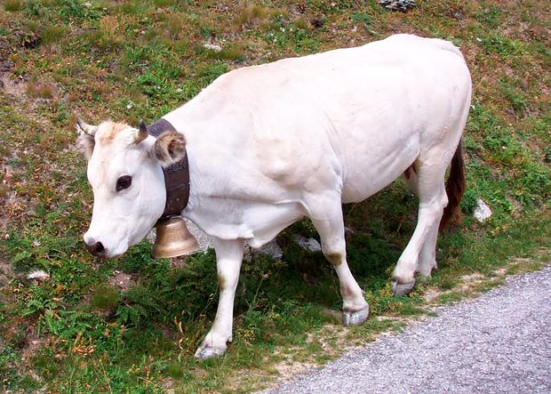 'The meat also happens to come from the white cows that wear the little bells in the Alps'