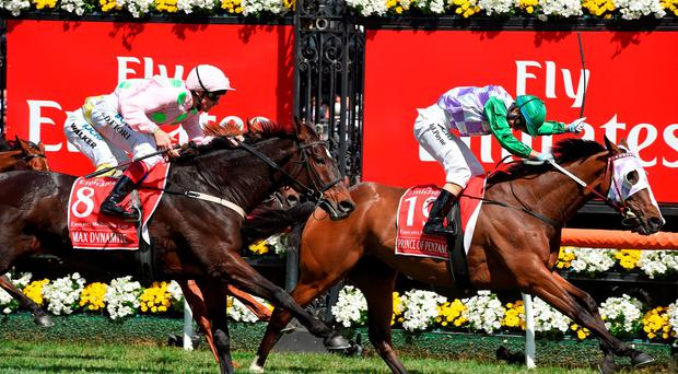 Max Dynamite (No.8) will aim to go one better in 2016 after chasing home Prince Of Penzance in this year's Melbourne Cup