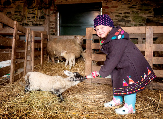 Out and about: Isobel Conachy gets up close to the wonders of nature playing with some lambs Photo: David Conachy