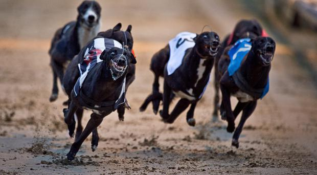 Hee Haws Sheriff raced off with the €13,000 prize for the Gain Feeds Select Stakes at Waterford (Stock picture)