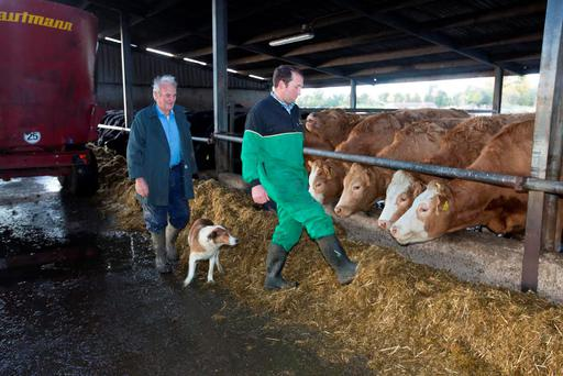 Liam (right) and Nicholas Phelan, Clogh, Castlecomer, Co. Kilkenny with Roxy feeding whole crop silage with rolled barley and soya bean to store cattle. Photo: Alf Harvey/HRPhoto.ie
