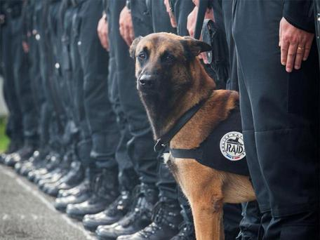 Police named the dog killed in Wednesday's raid as Diesel (not thought to be pictured) Police Nationale