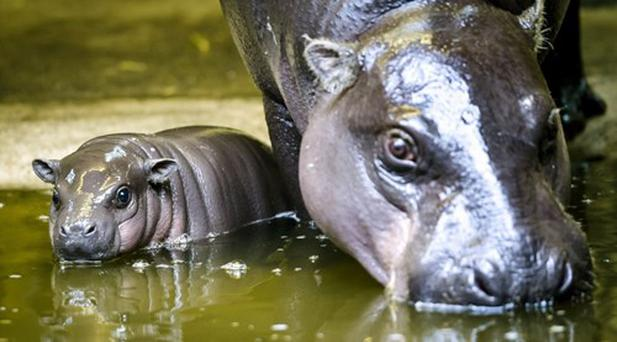 The baby is very attached to its mother Credit: PA/Ben Birchall