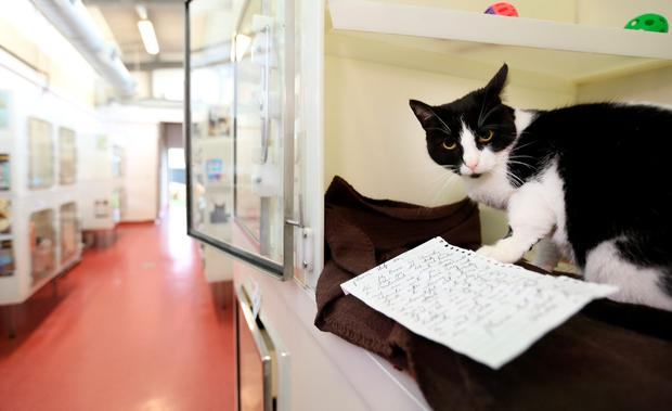 HEARTBREAKING: A letter reveals that some people are being forced to abandon their pets, like 'Sherdu' pictured here, after becoming homeless.