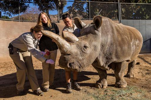 File photo: Nola with vet Meredith Clancy (left) and keepers Kim Millspaugh and Mike Veale (R) at the San Diego Zoo Safari Park in California in December 29, 2014. Reuters/Ken Bohn/San Diego Zoo Safari Park/Handout