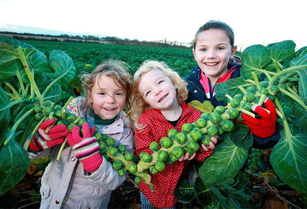 The Smyth sister Ava (5) and Jane (2) and Aine Keogh (9) pictured with some of David Keogh's Brussels Sprouts at Macetown, Tara, Co Meath. Photo: Frank Mc Grath.