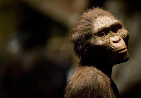 A sculptor's rendering of Lucy when she was alive, displayed at the Houston Museum of Natural Science in Texas Dave Einsel/Getty Images