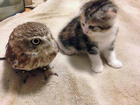 The unlikely BFFs Credit:Imgur/sweephislegsjohnny