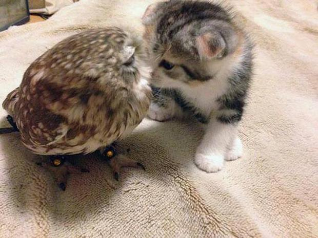 The pair seem close enough to kiss Credit:Imgur/sweephislegsjohnny