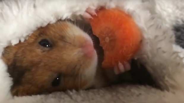 Mike enjoys his supper in his cosy bed Credit: YouTube/Mikesanman19