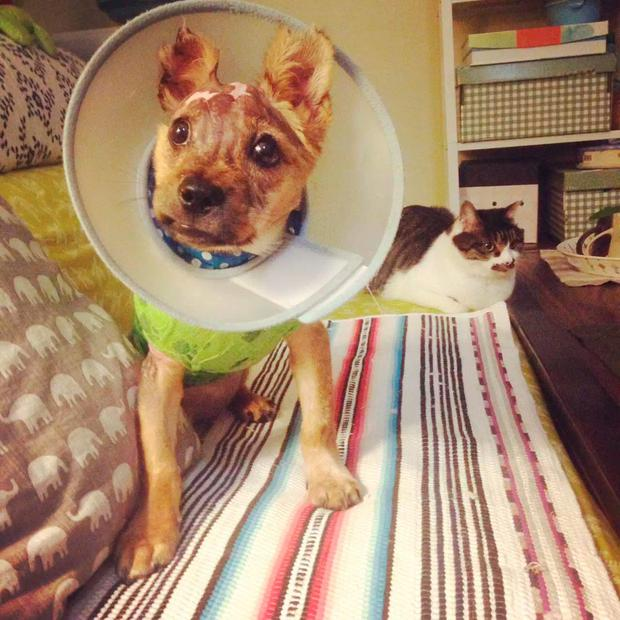 Tuffy with best friend Ms Yan's cat Credit: Animal Asia