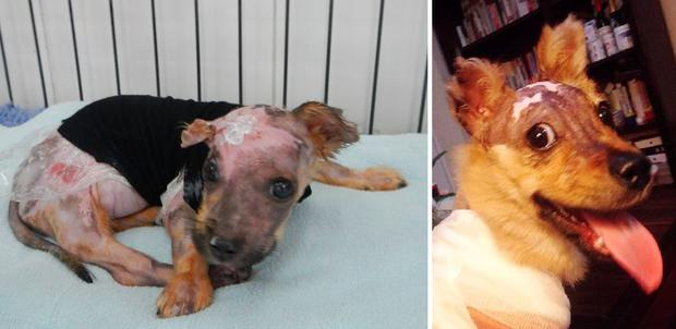 Tuffy suffered 60 pc burns to his small body Credit: Animal Asia