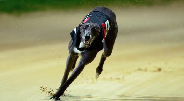 There's a ten-race card at Shelbourne where Shanks Whelan's Piercestown Lisa (9.58) could be the best bet in the D2/3 750 contest