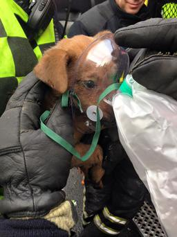 Limerick City Fire and Rescue rescued this brave little puppy from a house fire